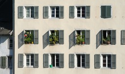 Windows Plants